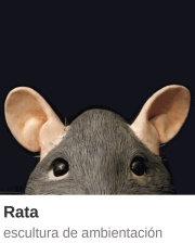 MiniCT_Rata